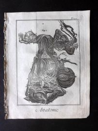 Diderot 1780's Antique Medical Print. Anatomie 22A Anatomy